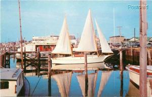 NJ,  Cape May, New Jersey, Marina, Curteichcolor No. 4C-K1018