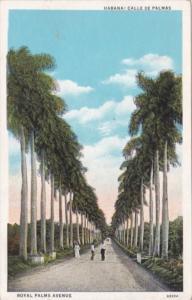 Cuba Havana Calle De Palms Royal Palms Avenue