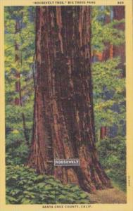 Roosevelt Tree Big Trees Park Santa Cruz County California