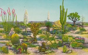 Cactus Few Varieties Of Desert Vegetation New Mexico