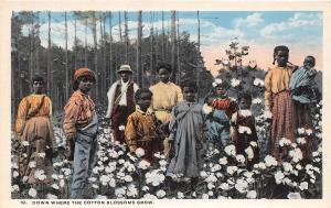 E41/ Black Americana Postcard c1910 Cotton Blossoms Grow Occupational Farm Kids1