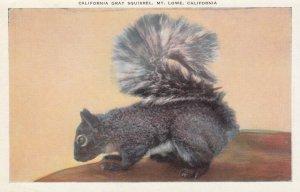 MT LOWE , California , 00-10s ; Gray Squirrel