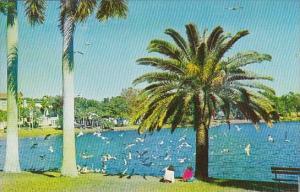Florida Saint Petersburg Mirror Lake