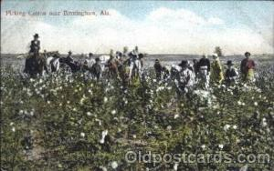 Picking Cotton near Birmingham, Ala, USA Black, Blacks Postcard Post Card  Pi...