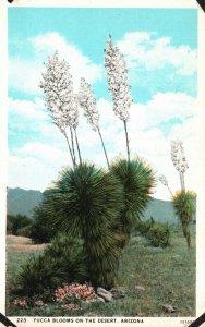 Yucca Blooms on the Arizona Desert, AZ, White Border Vintage Postcard g5745