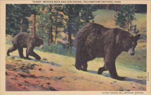Mother Bear and Cub Hiking Yellowstone National Park Curteich