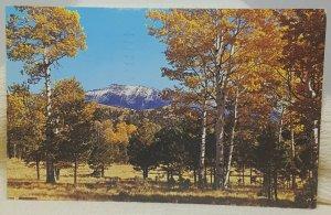 San Francisco Peaks Flagstaff 1964 Arizona Vintage Postcard