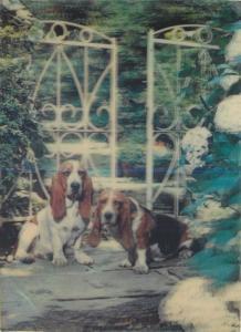 Lenticular stereo 3D postcard Basset dogs