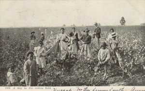A day in the cotton field, PU-1906