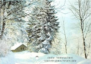 B53976 Winter Landscape Tree arbress