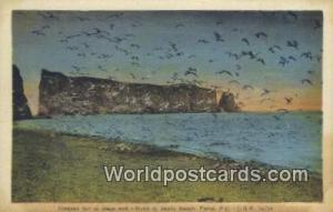 Perce, PQ Canada, du Canada Oiseaux sur la plage sud, Southe Beach  Oiseaux s...