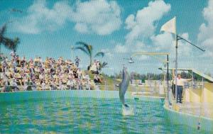 Florida Miami Seaquarium Jumping Porpoise Sparke The Bell Ringer