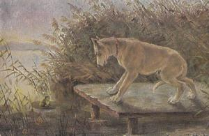 Ferocious Dog Hunting Tiny Miniature Monkey On Water Leaf Old 1903 Postcard