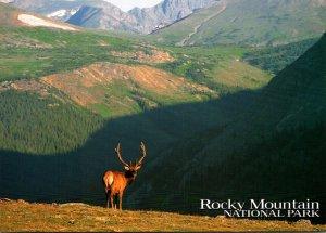 Elk Rocky Mountain National Park Colorado