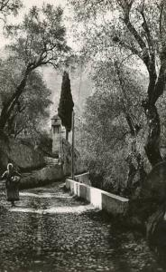 France - Cote D'Azur - The path under the olive trees  *RPPC