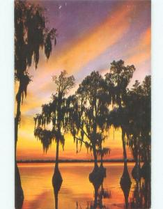 Pre-1980 SUNSET ON THE TREES Cypress Gardens - Winter Haven & Lakeland FL E8799