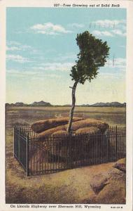 Tree Growing out of Solid Rock, On Lincoln Highway over Sherman Hill, Wyoming...