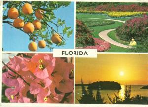 USA, Florida, multi view 1982 used Postcard