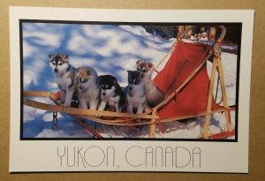 Yukon sled dogs, Canada postcard