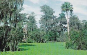 Lettuce Lake, Corkscrew Swamp Sanctuary, Near IMMOKALEE, Florida, 40-60's