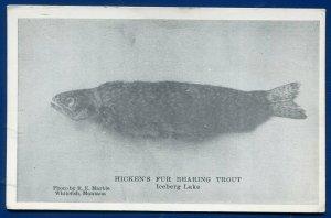 Hicken's fur bearing trout from Iceberg Lake Whitefish Montana mt postcard