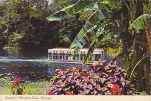 Glass Bottom Boat Silver Springs Florida
