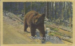 White Mountains New Hampshire, USA, Bear Postcard Post Card Old Vintage Antiq...