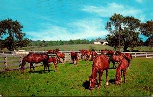 Iowa Greetings From Stuart Grazing Horses 1965