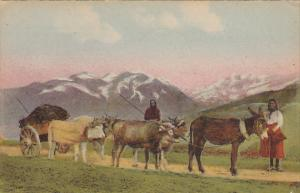 Ox Cart Tableaux Pyreneens 1957
