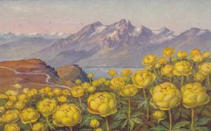 Trollius europaeus L., PU-1931
