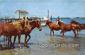 Outer Banks Poines Ocracoke Island, North Carolina Postcard Post Card Ocracok...