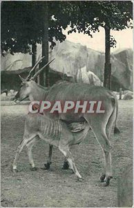Old Postcard National Museum of Natural History Zoological Park, Bois de Vinc...