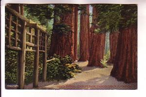Seven Sisters Park Vancouver, Old Growth Trees, British Columbia,
