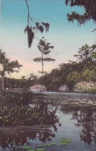 Florida Wakulla On The Jungle Cruise Albertype