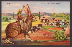 Cowboy Riding a Giant Jack Rabbit Exaggeration Linen Comic Postcard