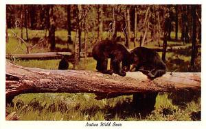 Curteichcolor, Native Wild Bear  Unused