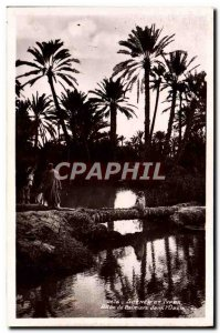Old Postcard Scenes And Types Palm Allee in & # 39oasis