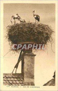 Old Postcard Alsace Storks Nest