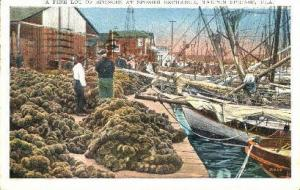 Sponge Industry Tarpon Springs FL 1931