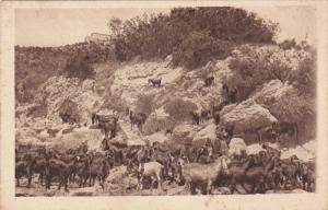 Horses, Veduta Del Sacrificio Di Elia Dal Lato Della Pianura Di Esdrelon, 191...