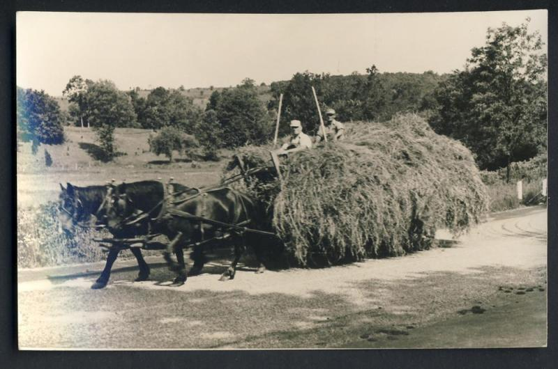 Horses/Team Pulling Hay Wagon Postcard, RPPC, Real Photo