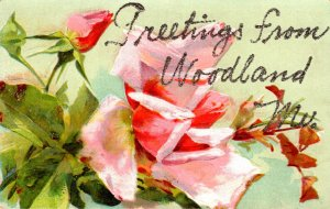 Maine Woodland Greetings With Flowers 1908