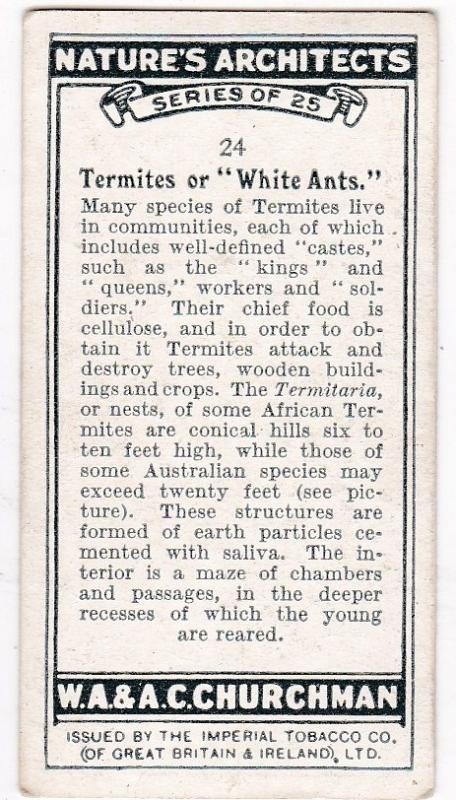 Cigarette Card Churchman NATURE'S ARCHITECTS No 24 Termites or White Ants