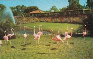 Florida Miami Flamingos Parrot Jungle Red Road
