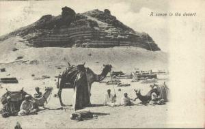 egypt, A Scene in the Desert, Camel (1899) Lichtenstern & Harari 17