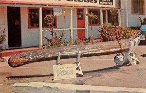 BODEGA BAY, CA Great Blue Whale Bone Sonoma Co. Roadside c1950s Vintage Postcard