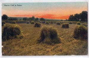 Harvest Field - Hay