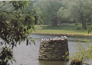Sullivan's Pond, Dartmouth, Nova Scotia,  Canada, 50-70