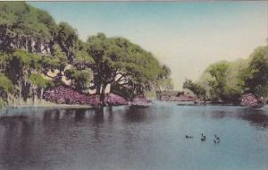 South Carolina Charleston Great Lake Middleton Place Gardens Albertype Handco...