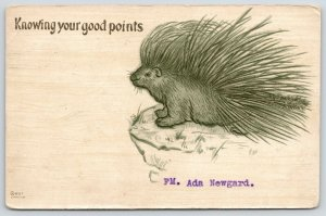 Comic Pun~Knowing Your Good Points~Porcupine Stands on Promontory Ledge~1906 PC